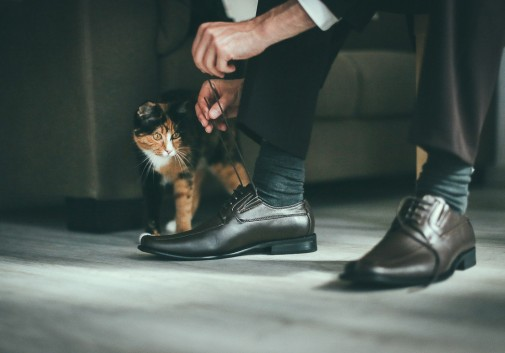 chat-preparation-mariage-chaussure-patience