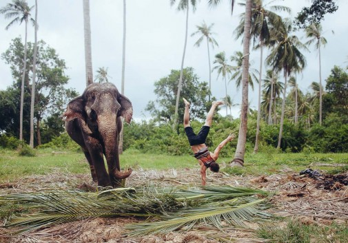 elephant-thailande-poirier-funny-nature