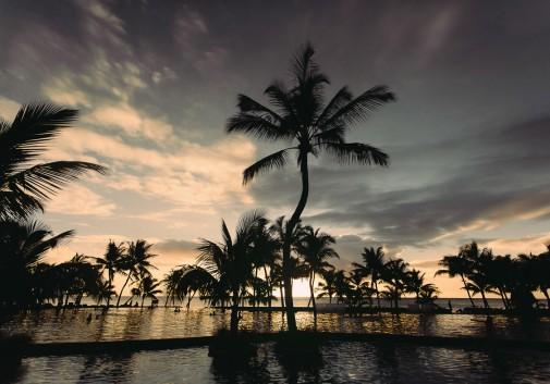 palmier-ile-maurice-piscine-paysage