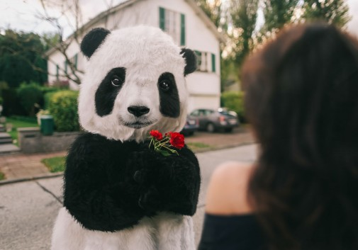 panda-insolite-amour-comique-photoshop