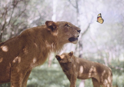 papillon-nature-lion-rencontre-mignon
