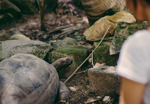 tortue-sourire-voyage-ile-nature