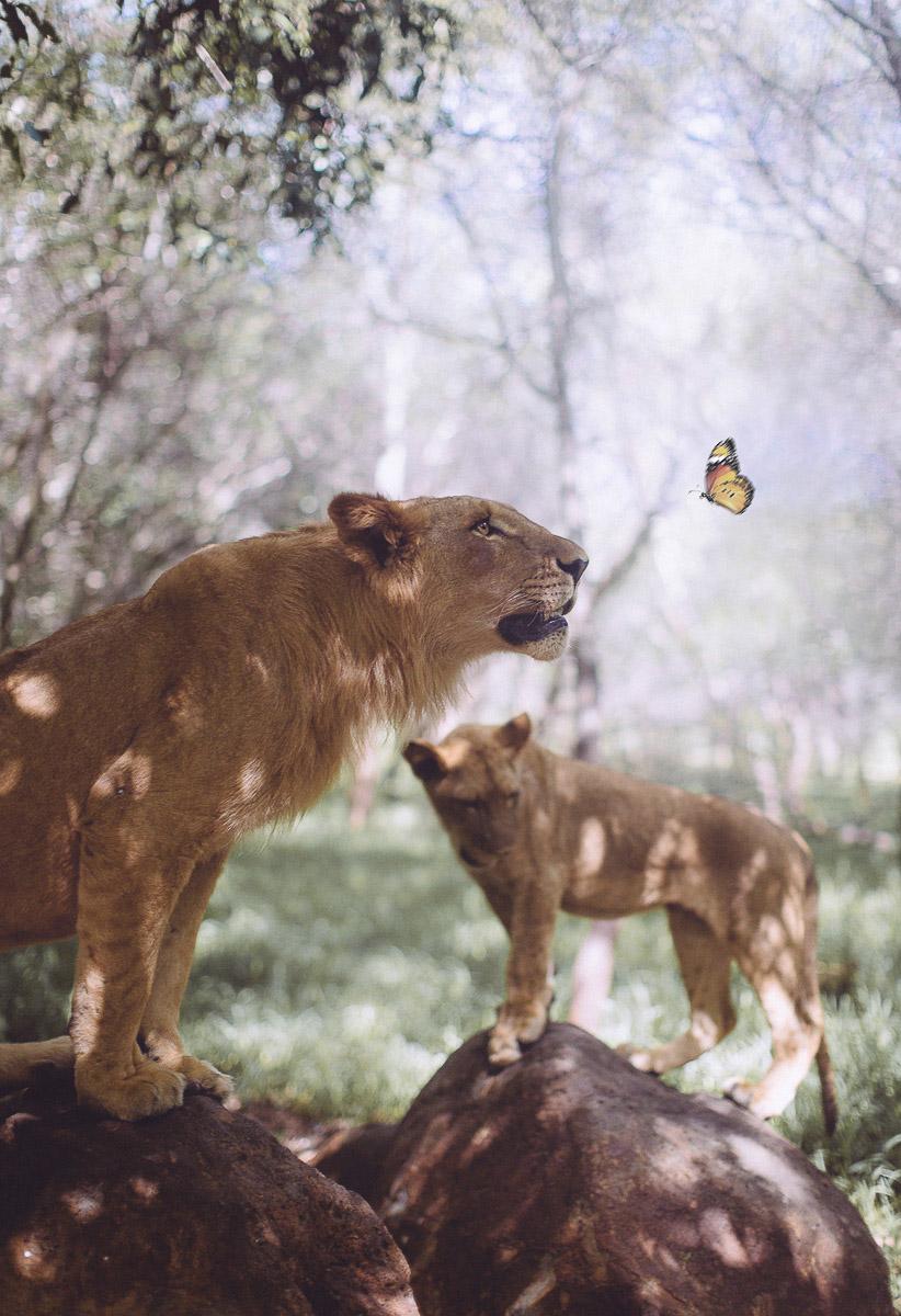 Rencontre homme lion